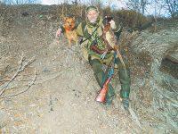 Карело-финская лайка: рыжая гроза фазанов