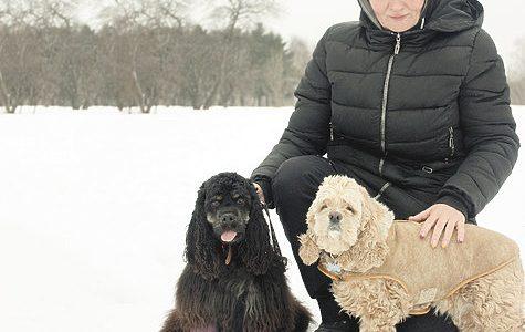 Здоровье собак зимой: что нужно знать и иметь