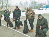 Прошла Дмитровская выставка охотничьих собак