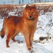 Лахти — когда собаке не повезло с хозяевами