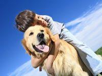 В Москве возможен дом для престарелых животных