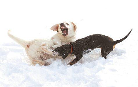 От чего зависит характер собаки