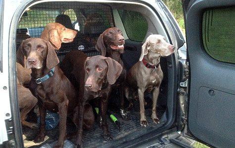 Список потенциально опасных собак МВД сократило до 12 пород