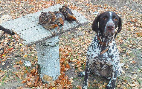 Волшебная птица осеннего леса