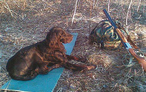 Охотник и собака: обыкновенная чудо