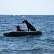 В отпуск с легавой собакой