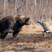 Про нападение на охотничью испытательно-тренировочную станцию Фирсановка и в защиту ИТС
